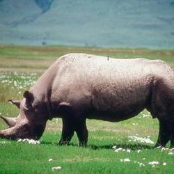 Call for action against rhino poaching