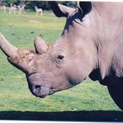 Drones to combat rhino poaching: Global initiative