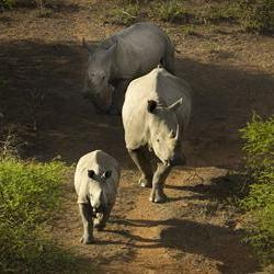 US charges SA men for illegal rhino hunts