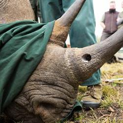 International collaboration needed against rhino poaching