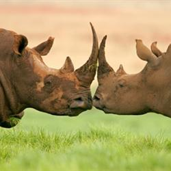 SA, Moz sign deal to fight rhino poaching