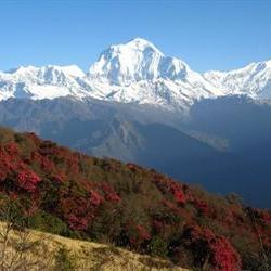 Search continues for missing Nepal guides