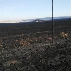 We're in dire straits: Harrismith farmer