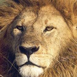 Lion industry wants to get its affairs in order