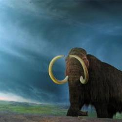 US Farmer discovers woolly mammoth