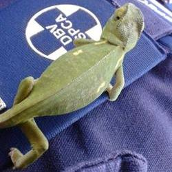 Don't buy roadside reptiles – NSPCA