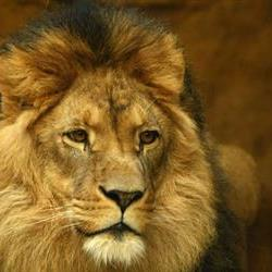 Zim wants Cecil's killer extradited