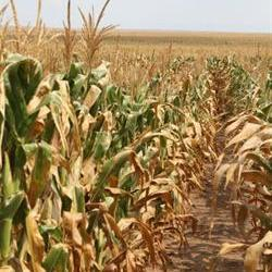 FS govt urged to apply for drought aid ASAP