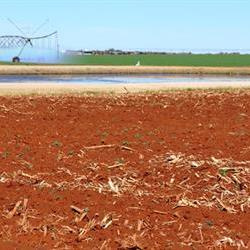 Court judgment to impact 'options' to buy agri land