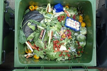Millions could be fed with wasted food | Agriculture News Article