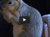 Afternoon Delight: Squirrel acts as a guard dog to scare off burglars.  | Blog Post