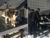 Afternoon Delight: Police build regular visitng cats a house at their station. | Blog Post