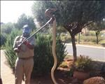 Snakes becoming more active as summer approaches  | News Article