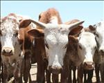 Southern African animal diseases moving north | News Article