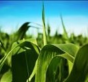 DAFF expected to introduce Plant Health Bill soon | News Article
