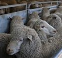 New approaches in animal health under discussion in Northern Cape | News Article