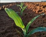 Rain comes just in time for Bultfontein farmer | News Article