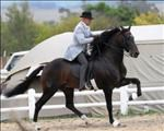 SA Boerperd not just a horse owned by a farmer | News Article