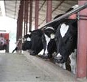 Hope for upturn in milk sector | News Article