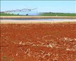 Insufficient calcium can affect crop yields | News Article