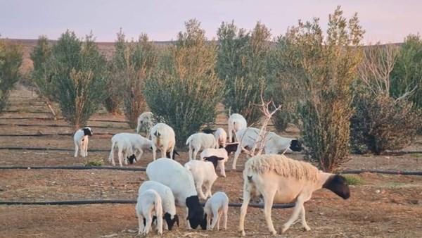 Liefdadigheidsorganisasie teel nou skape om boere te help met kuddes   News Article