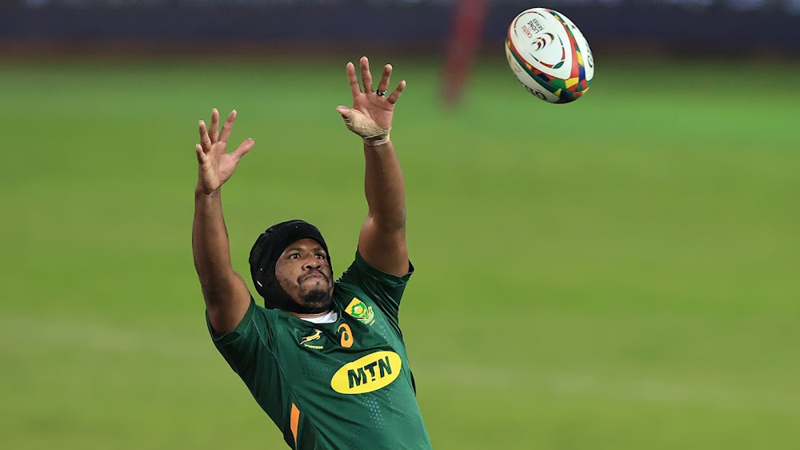 Springboks opt for continuity against the Wallabies | News Article