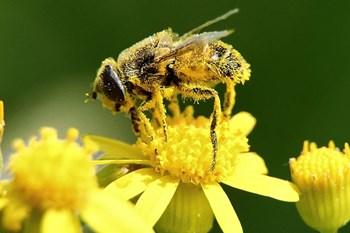 Pollen Report 15 – 21 October 2021 | Blog Post