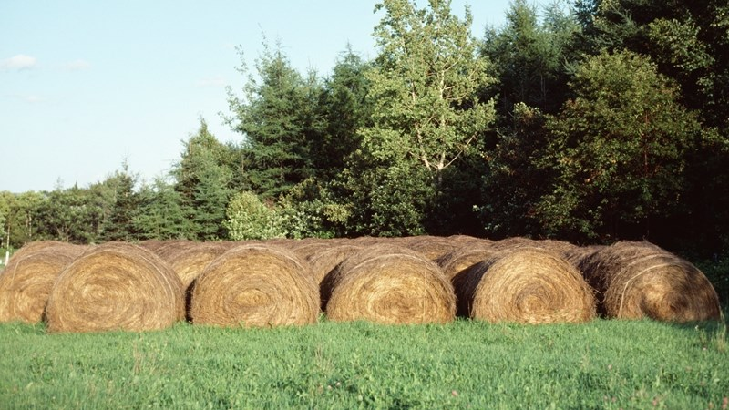 Hier is van jou hoof landboustories op OFM | News Article