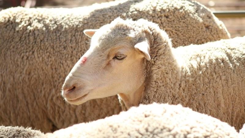 Agri Relief Foundation – Die nuwe hulpfonds              | News Article