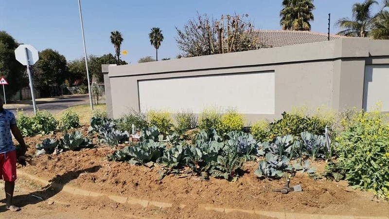 Man who planted vegetables on Pretoria sidewalk in court   News Article