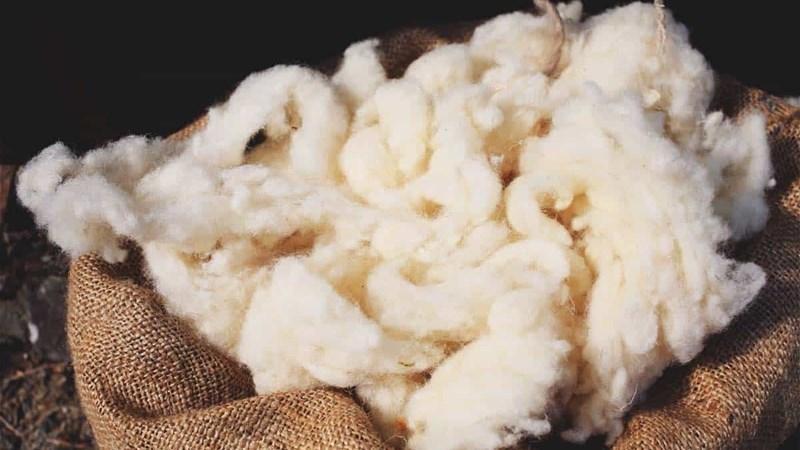 Nie-gesertifiseerde wol onder druk | News Article