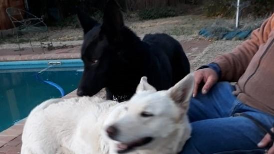 Kontreikuiers: Anne Le Grange oor haar liefde vir wolwe | News Article