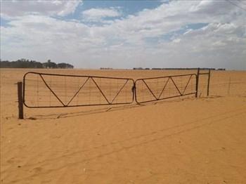 'Boere moet elke sent van droogtehulp kry'  | Agriculture News Article