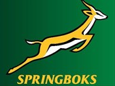 Will the Springboks return to the top? | Blog Post