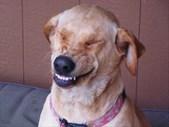 -TBB- Good News Bad New: A Dog Returns Home | Blog Post