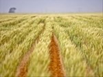 R20 billion needed by DAFF for agriculture reform   News Article