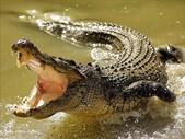Just Plain Drive: Throwback Thursday - Wat is 'n krokodil.   Blog Post