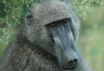 No tests done on rescued baboons | News Article