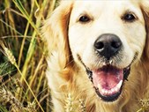 The Good Blog - The Science of Talking to Dogs in a Baby Voice | Blog Post