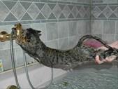 Just Plain Drive: Never give a cat a bath. | Blog Post