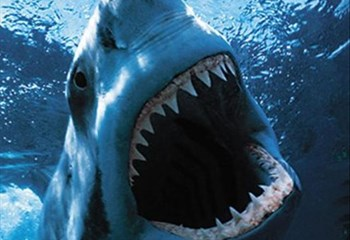 Great White sighted - Port Alfred beaches closed | News Article