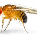 Fruit Flies More Helpful Than You Think | Blog Post