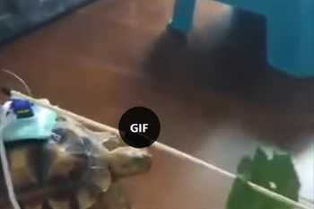 Saturday Express: A remote controlled turtle  | Blog Post