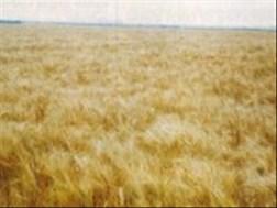 Senwes Grainlink: Hier is jou jongste Safex-pryse | News Article