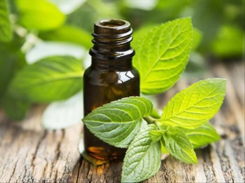 Can Peppermint Toothpaste Grow Hair? | Blog Post