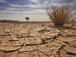 #NKdroogte: Water aangery vir diere, bronne droog egter op | News Article