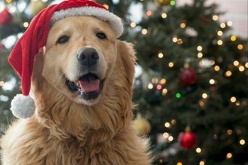 How about treating your pet with a gift this Christmas? | Blog Post