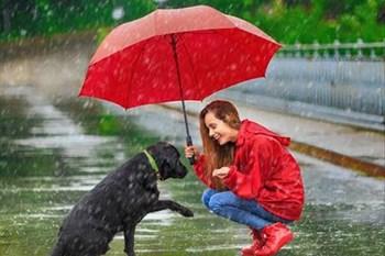 The Joyride loving this rain! | Blog Post