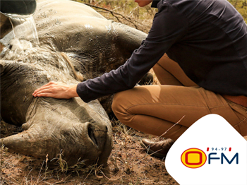 STROOP, Journey into the Rhino horn war  | Blog Post