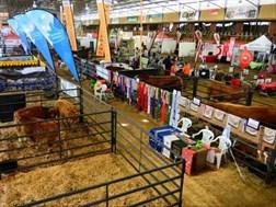 Alfa2019: Reuse-uitstalruimtes in plek vir vee-ekspo | News Article